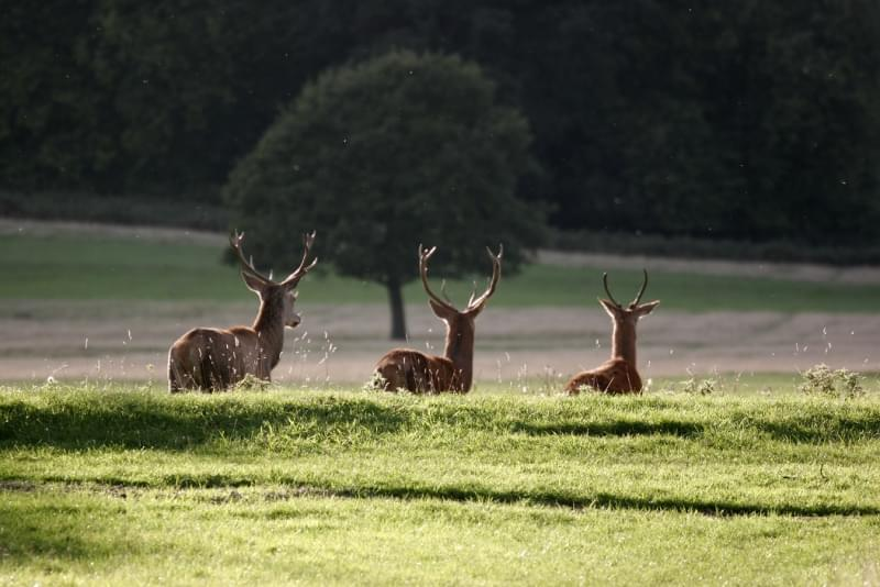06 richmond park