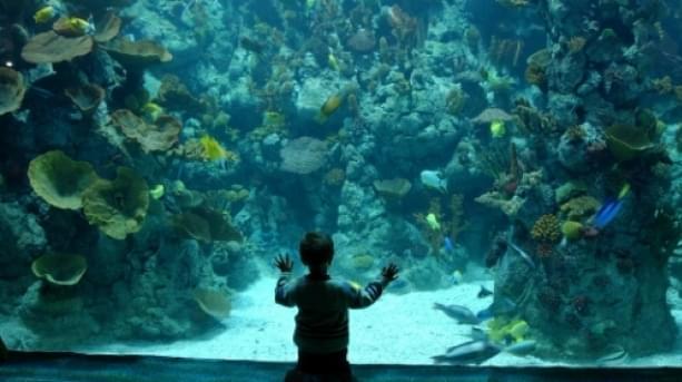 06 the deep aquarium