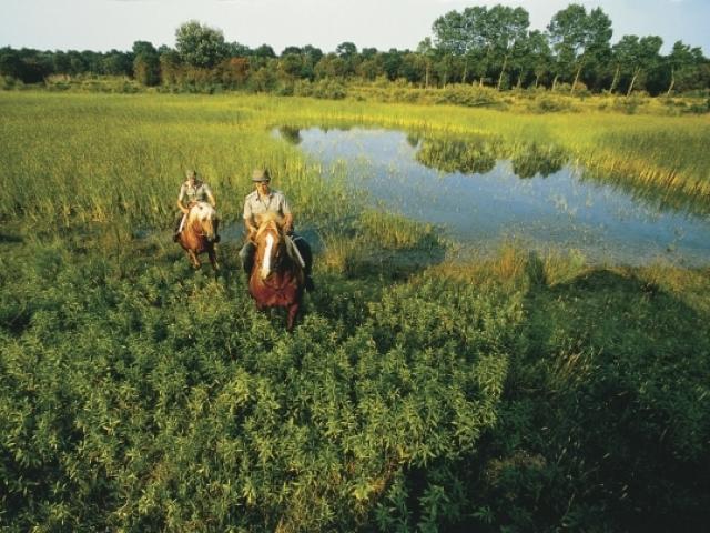 08 riserva naturale bosco della mesola