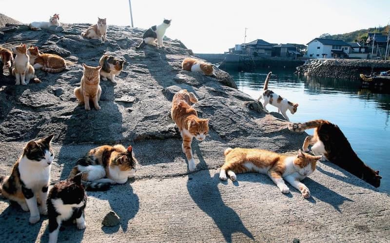 isole dei Gatti nel Mondo