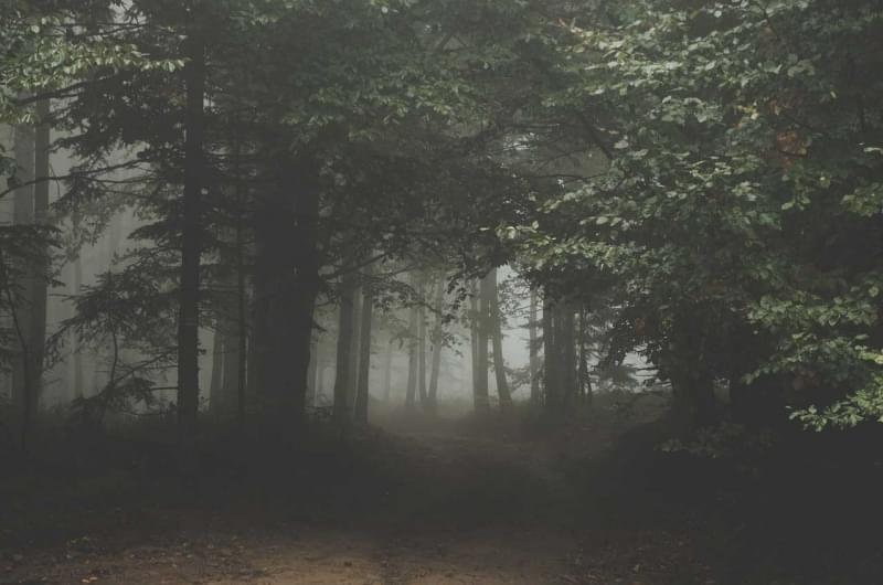 Foresta di Hoia-Baciu, Romania