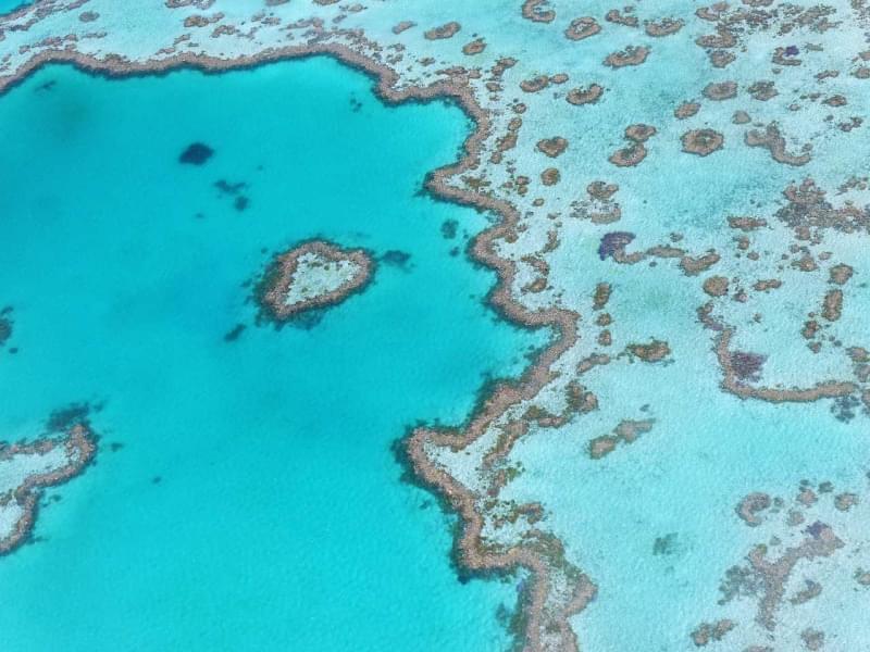 2 grande barriera corallina