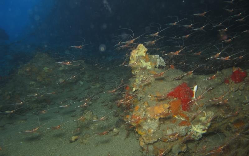 Grotta dell'Acqua Dolce