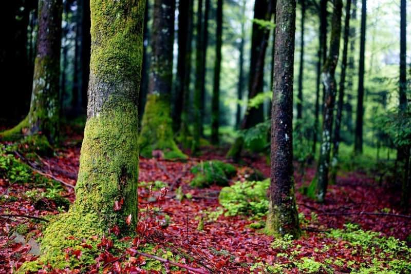 Forêt de Lyon, Francia