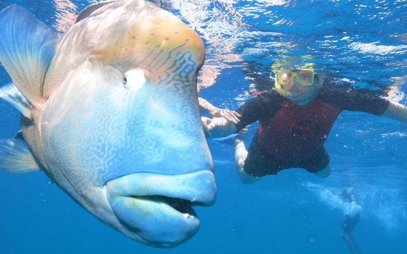 Norman Reef, Australia