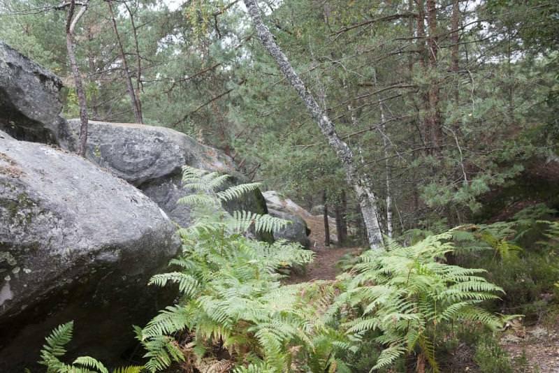 Forêt de Fontainebleau, Francia