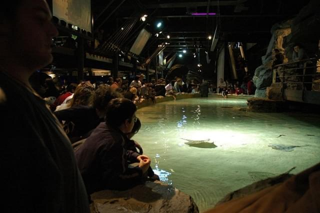 acquario interno