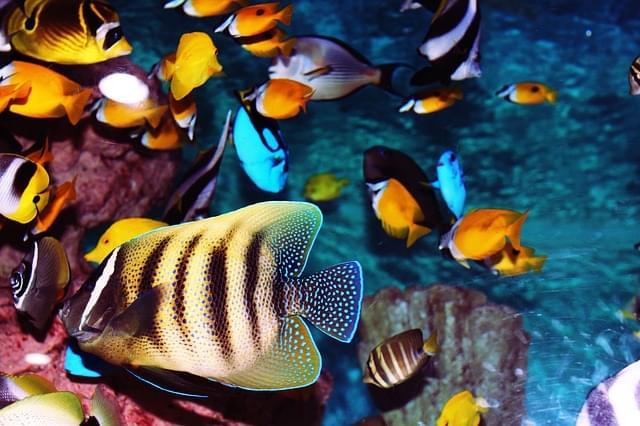 acquario pesci tropicali