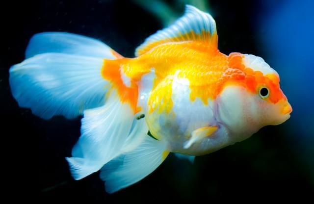acquario siracusa