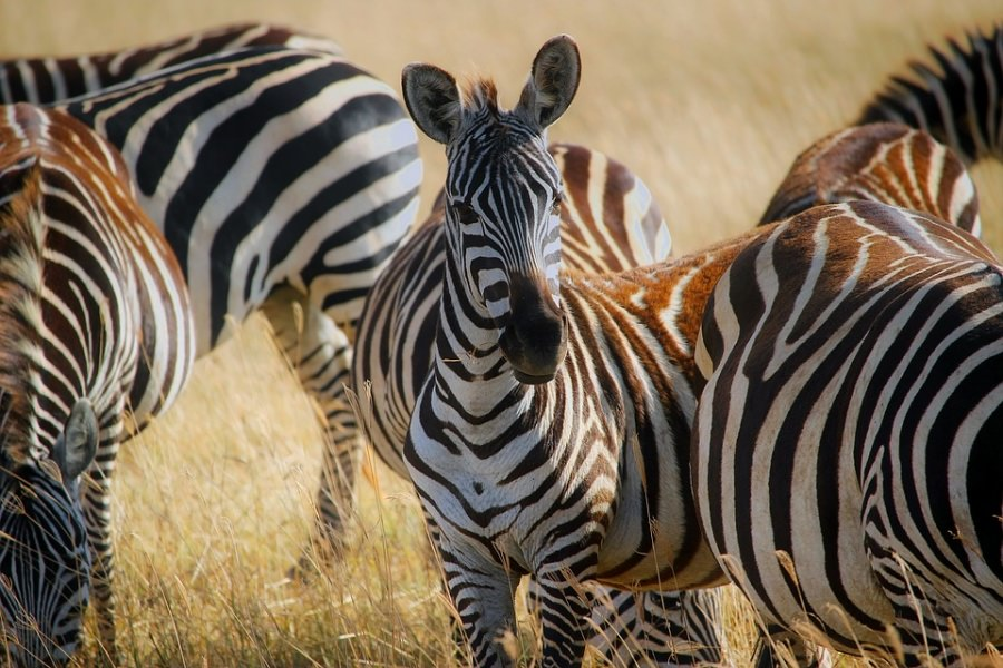 parco nazionale nairobi
