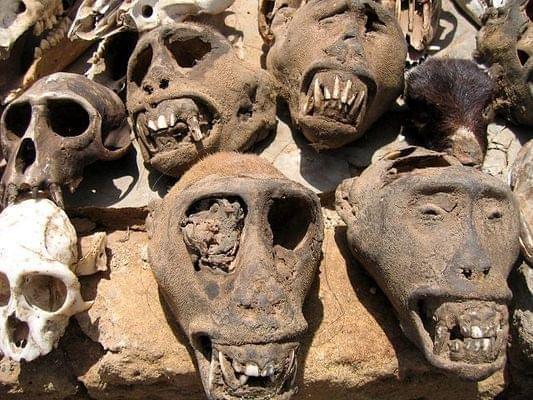 akodessewa mercato voodoo