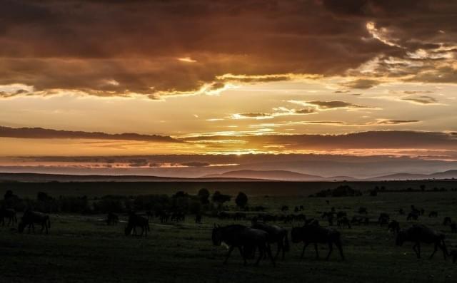 alba masai mara savana