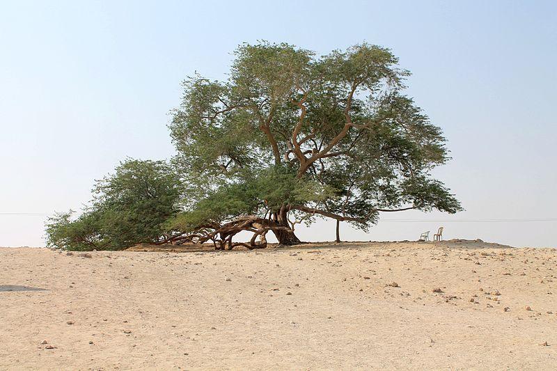 1 albero della vita