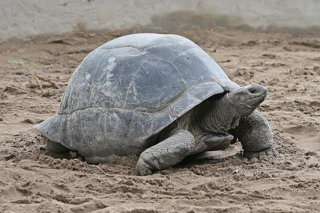 tartarughe giganti prison island zanzibar