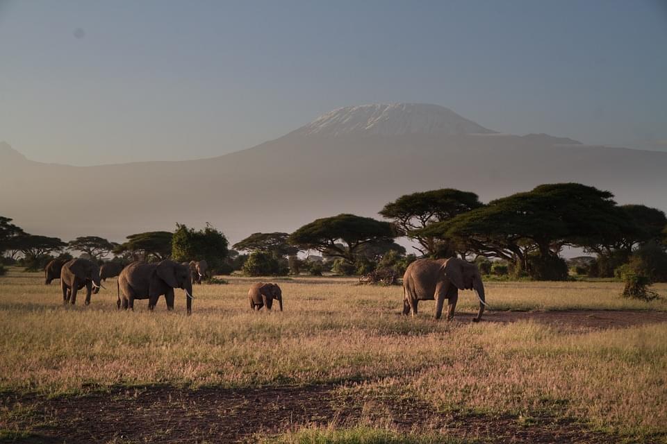 amboseli kilimangiaro kenya