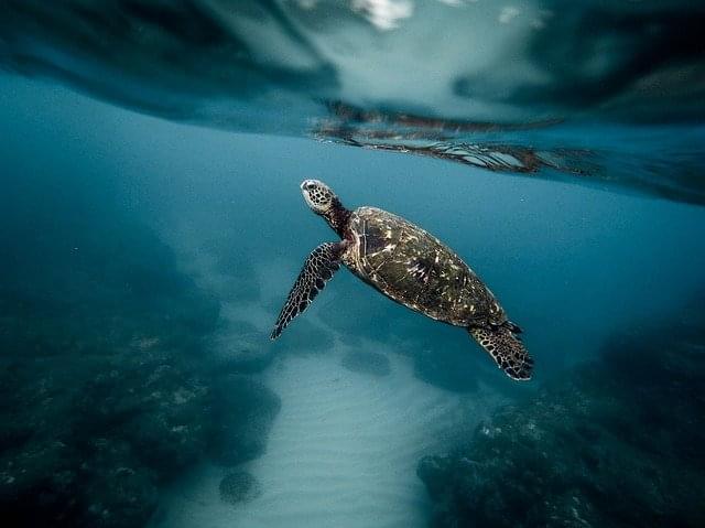 tartarughe marine Bosco Pantano di Policaro