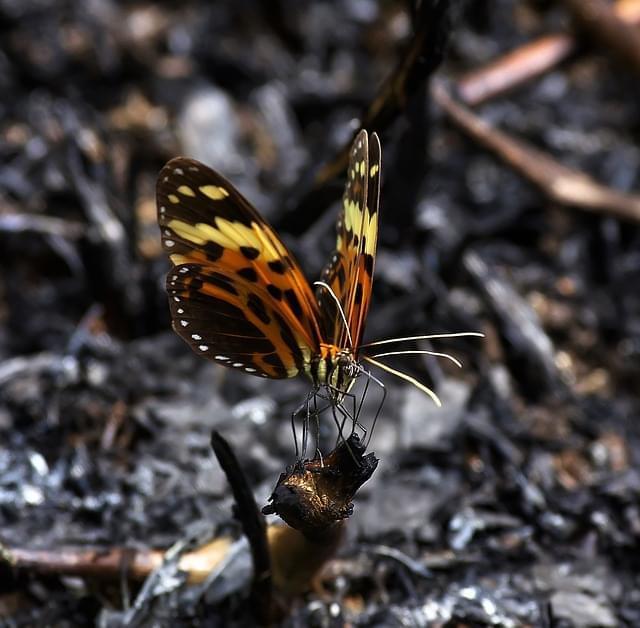 animali foreste guyana