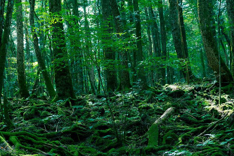 la foresta dei suicidi giappone
