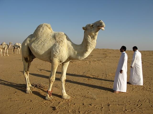 arabia saudita deserto
