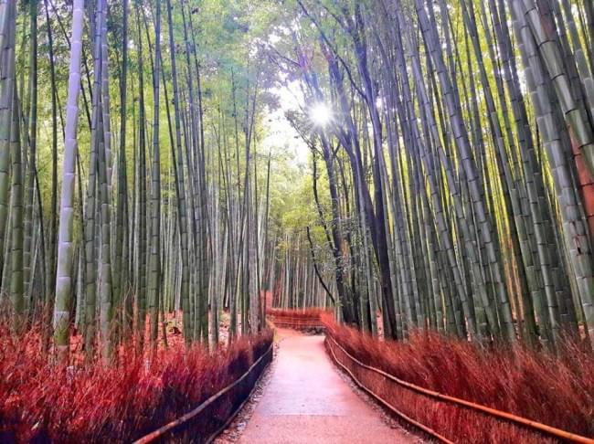 Come organizzare un viaggio in Giappone Fai da te