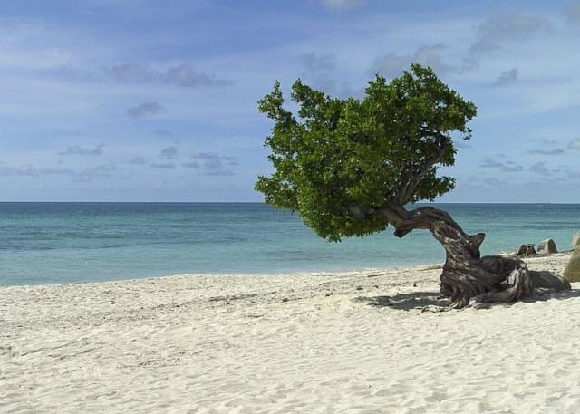 aruba fofoti alberi