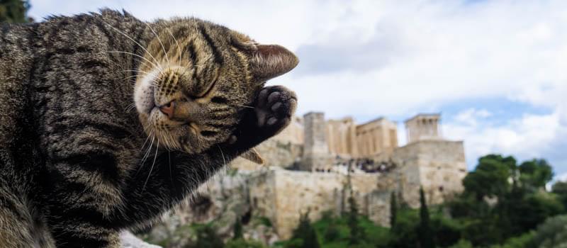 Atene gatto acropoli