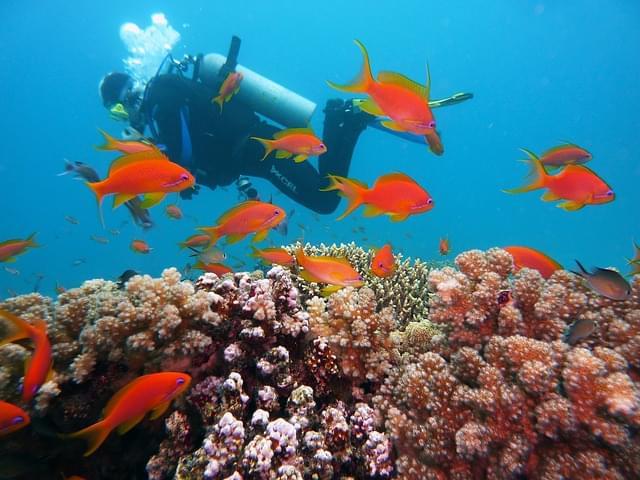 snorkeling a Fernando de Noronha