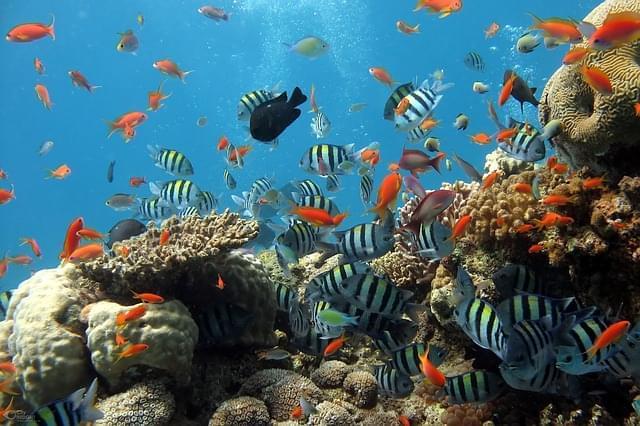 barriera corallina 4