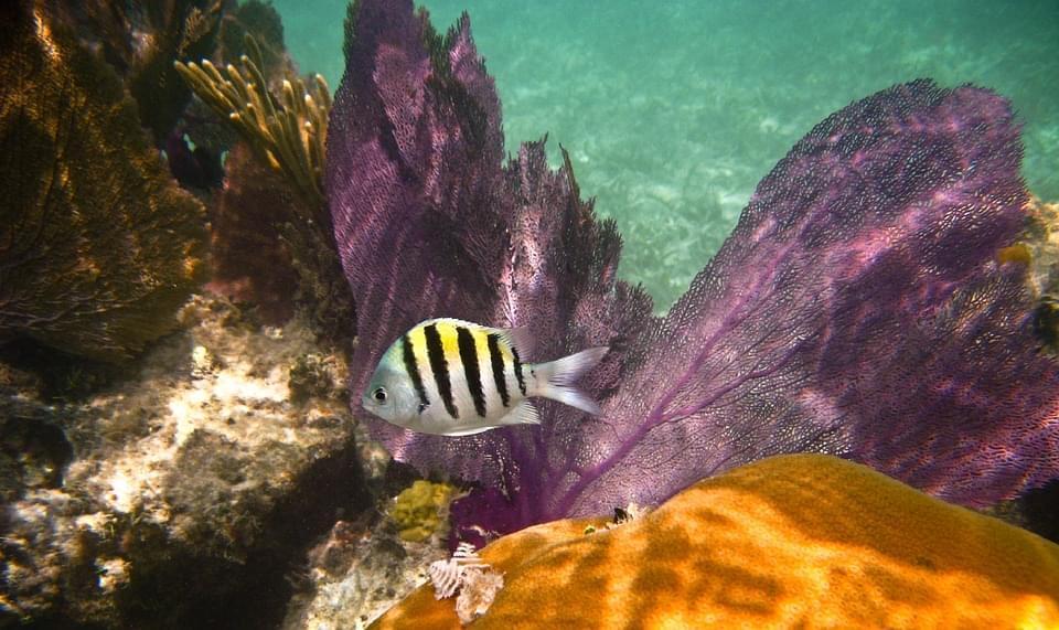 barriera corallina caraibi