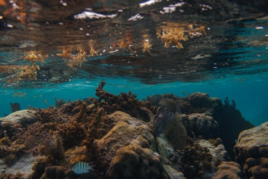Belize barrier reef, Mar dei Caraibi