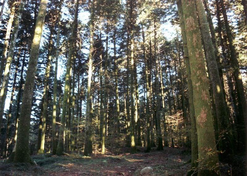 03 bosco archiforo