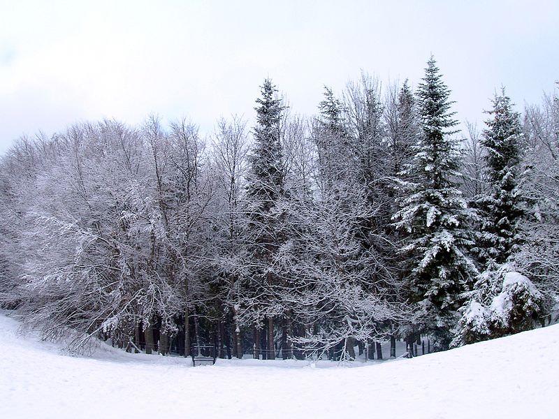 bosco innevato passolanciano chieti