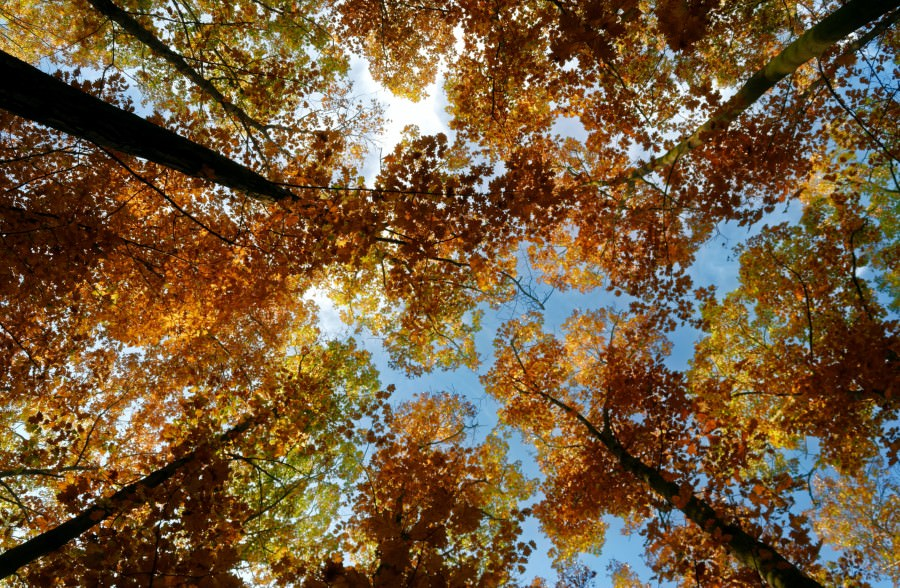 hyde park autunno