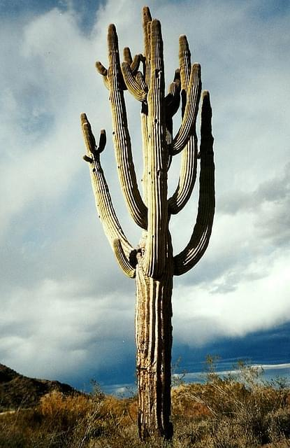cactus giganti argentina