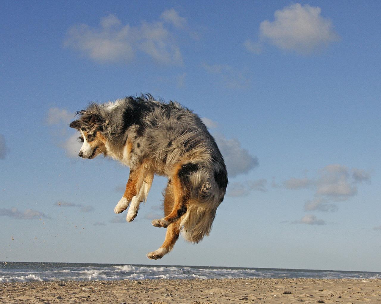 cani che giocano