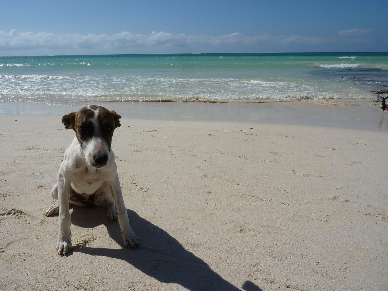 Spiaggia di Pluto