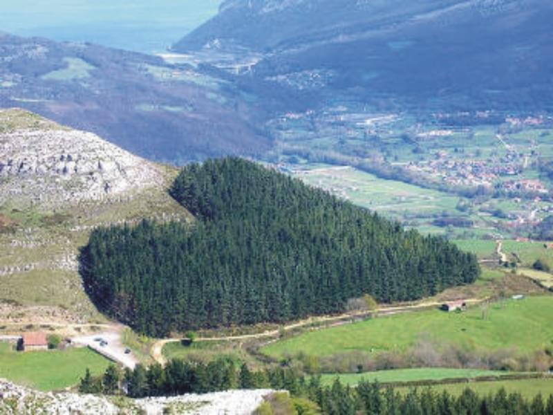 Foresta a forma di cuore in Cantabria