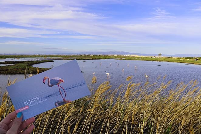 capoterra laguna santagilla fenicotteri