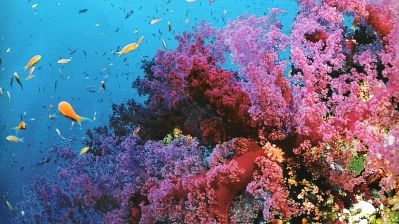 Dove fare Snorkeling nel Mediterraneo