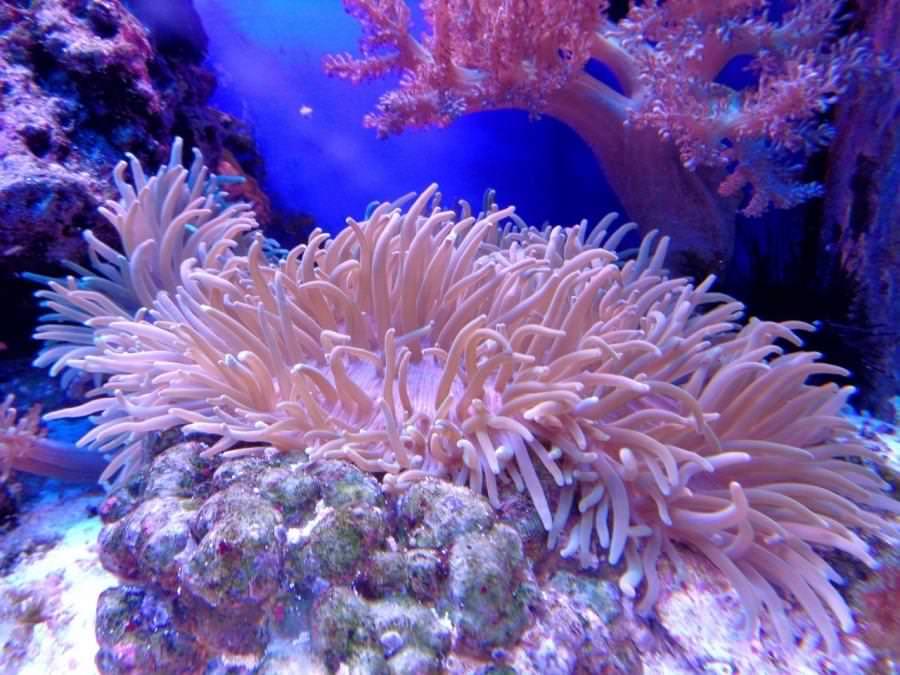 Barriera Corallina di Andros Bahamas