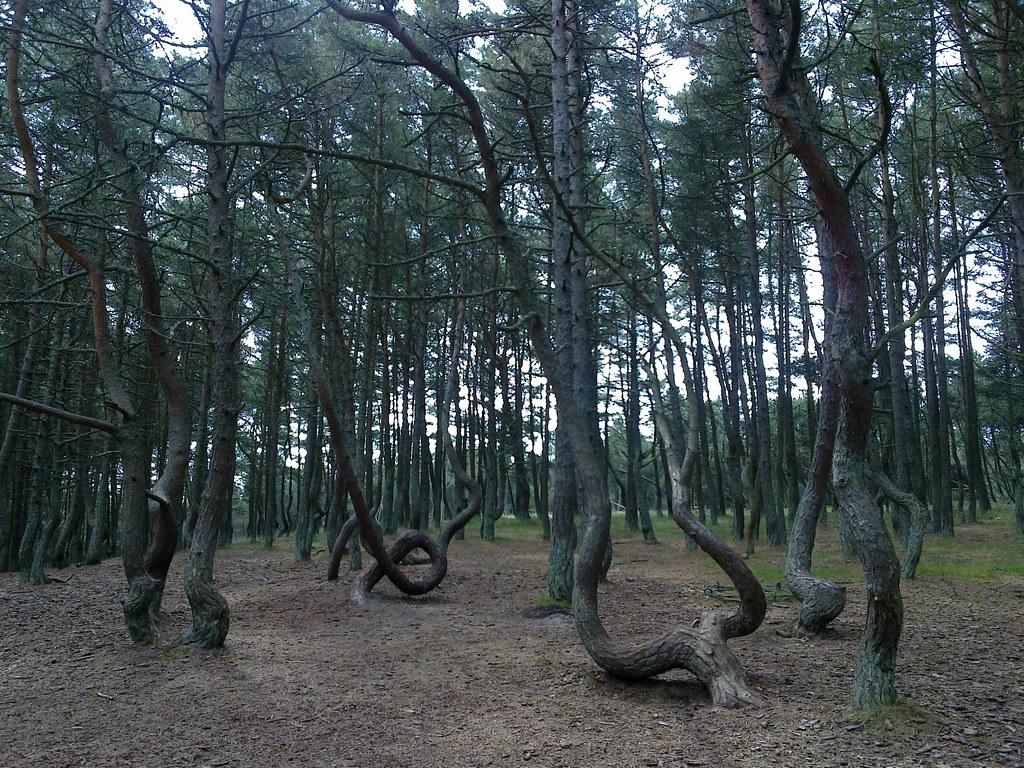 La Foresta danzante, tra Lituania e Russia