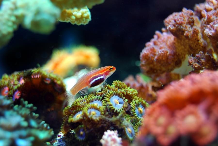 Barriera Corallina di Apo, Filippine
