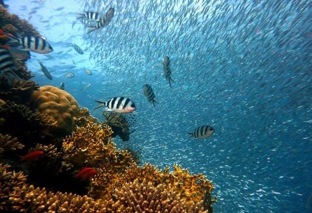 barriera corallina(3)