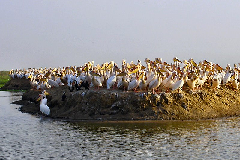 parco nazionale Bird Sanctuary