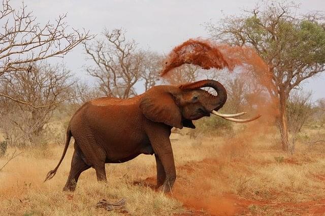 leone in kenya