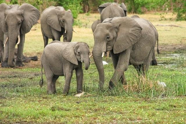 elefanti tanzania africa