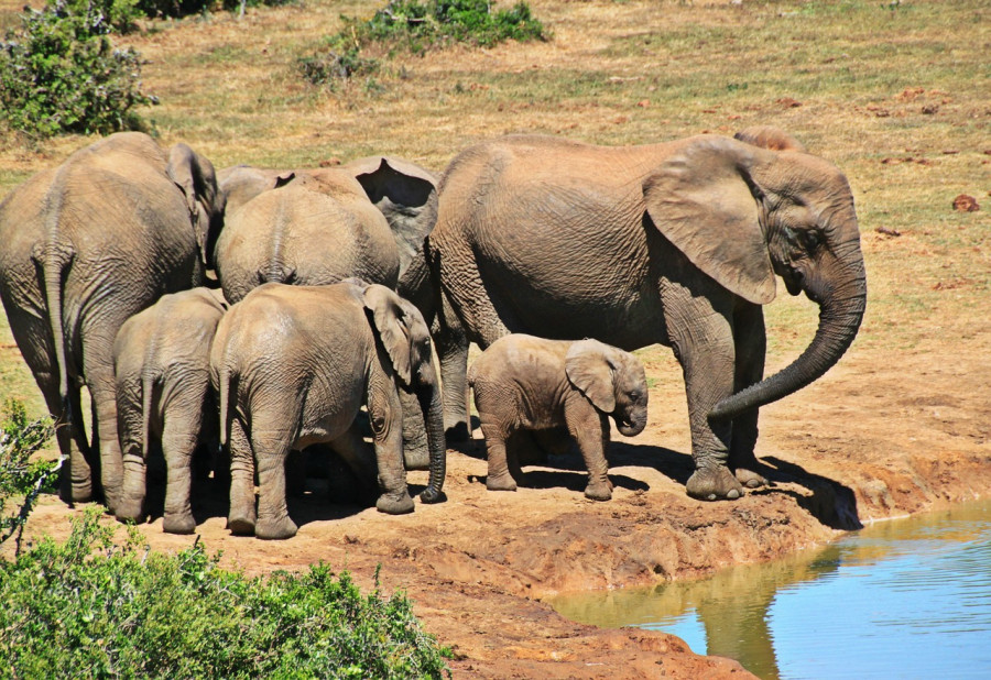 Kruger National Park , Sud Africa