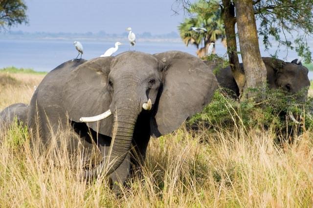 Kibale-National-Park