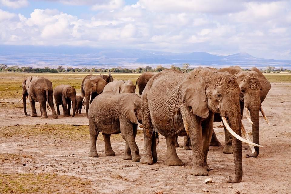 elefanti amboseli keya