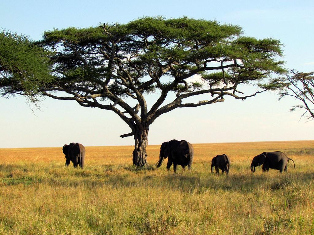 Serengueti National Park, Tanzania